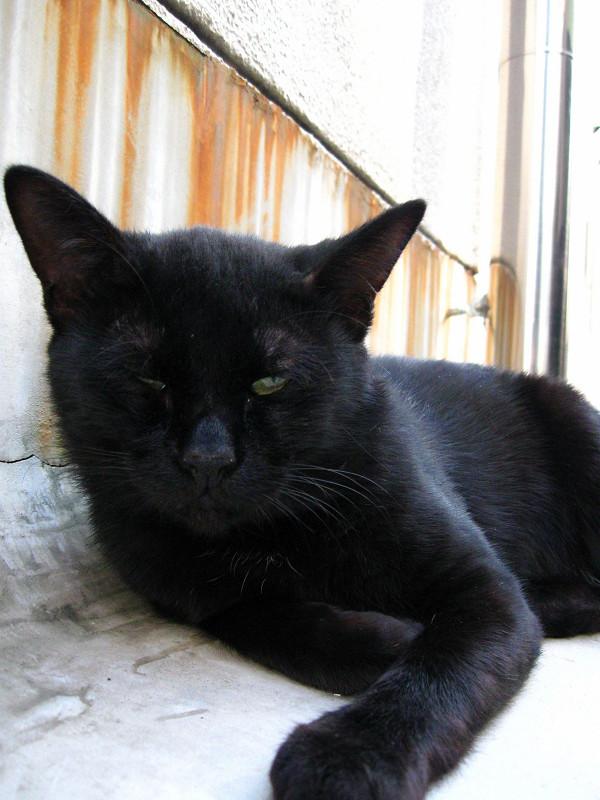 寝てる黒猫2