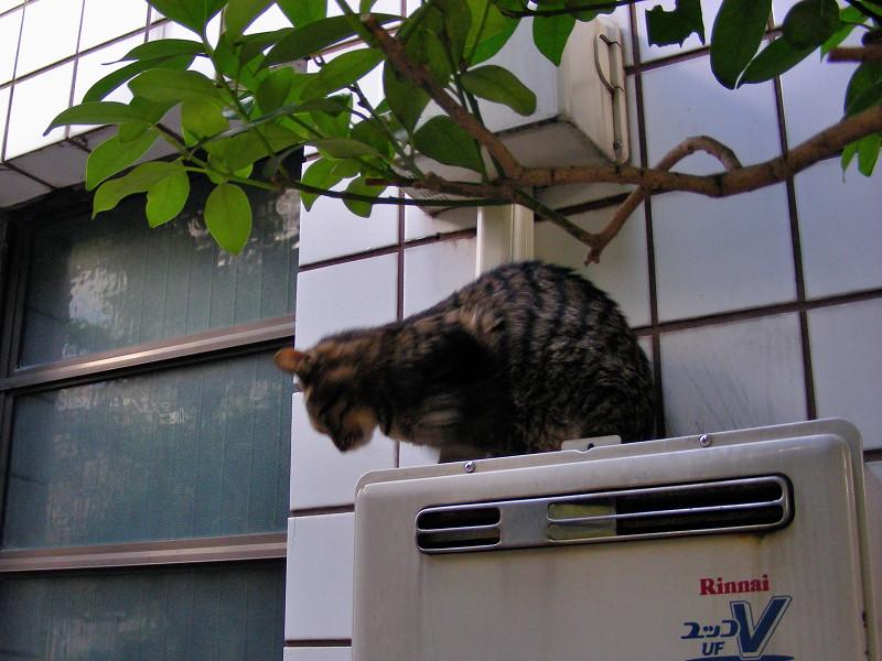 室外機Rinnaiとキジトラ猫3