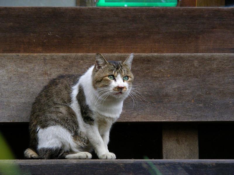 和風な居間とキジ白猫3
