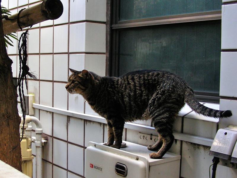 室外機NORITZとキジトラ猫