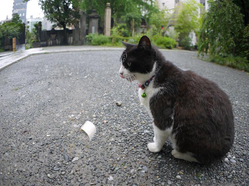 境内の黒白猫1