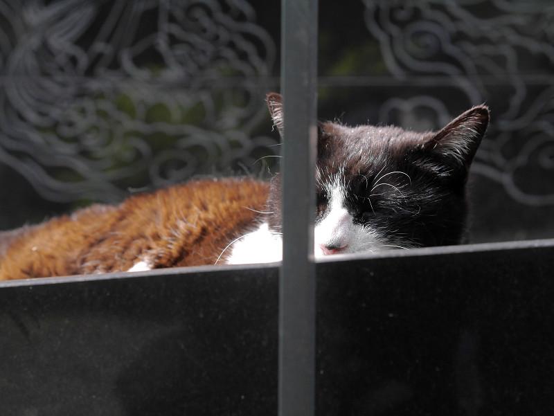 御影石と黒白猫