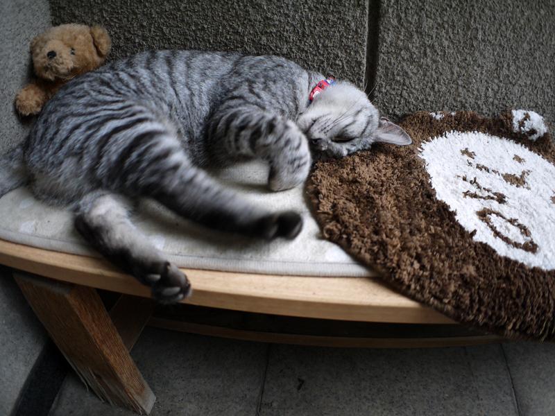 熟睡中のサバトラ猫2