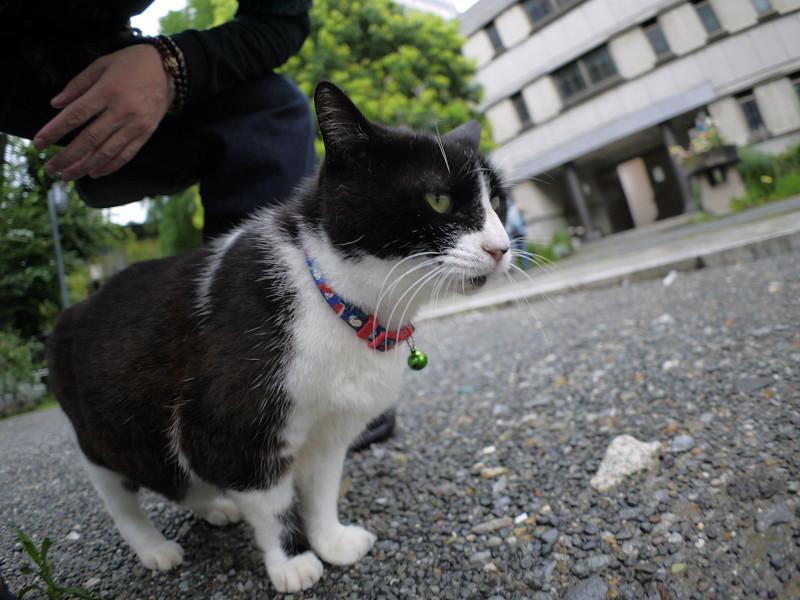 境内の黒白猫3