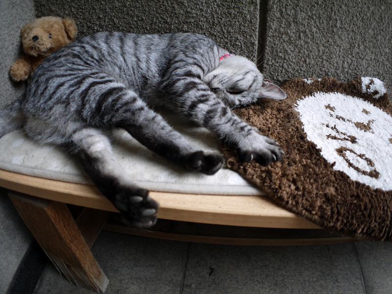 熟睡中のサバトラ猫3