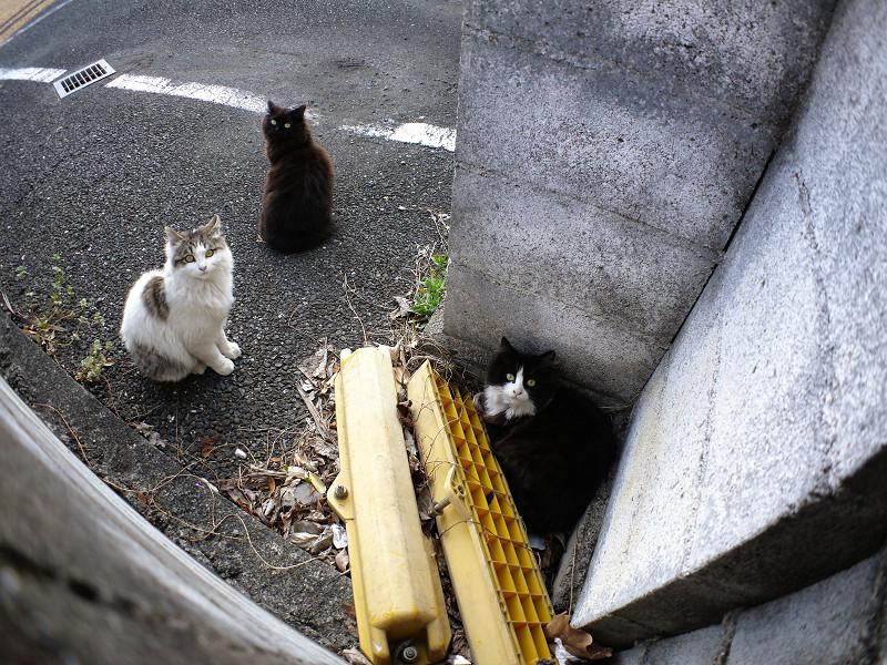 見上げている猫たち