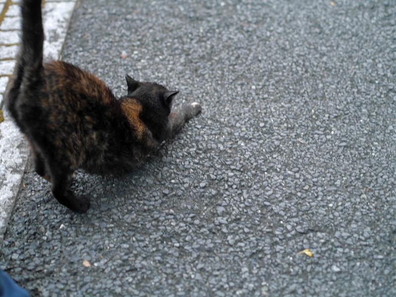 伸びをする黒サビ猫2