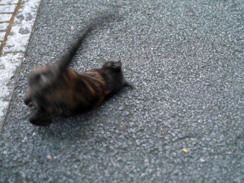 伸びをする黒サビ猫3