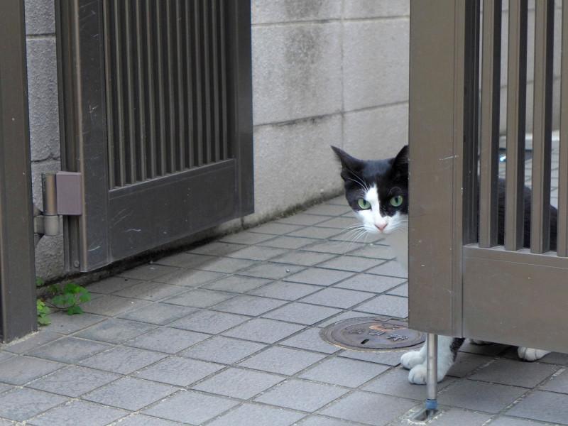 門扉の黒白猫1
