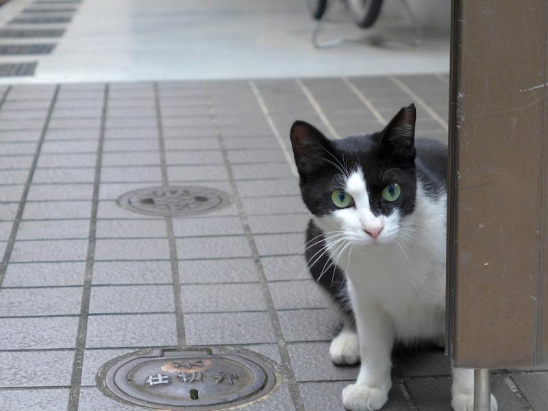門扉の黒白猫2