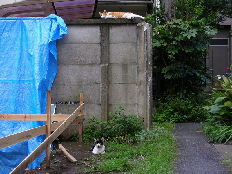 高所低所の猫たち1