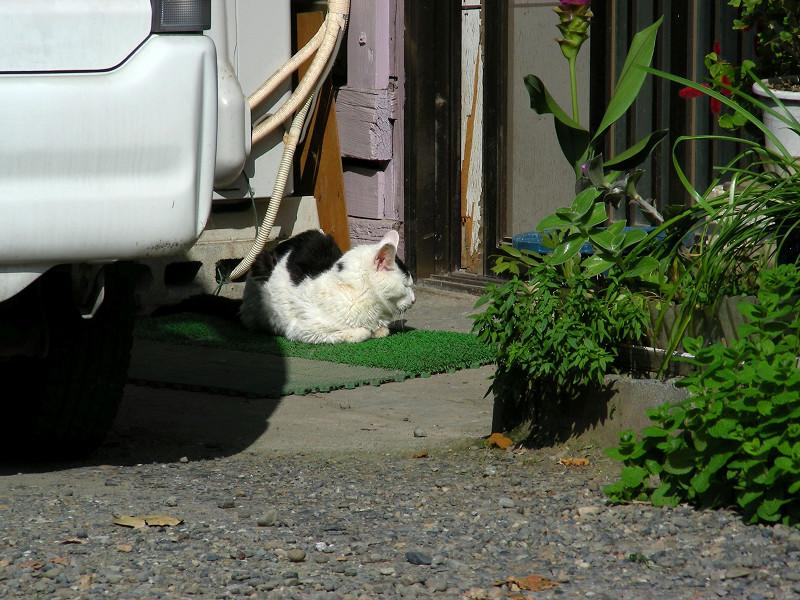 玄関先の白黒猫1