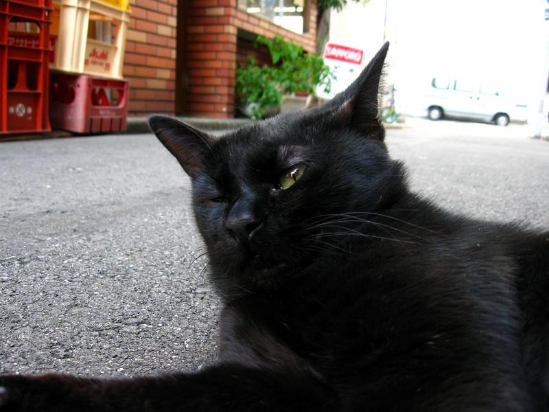 道路で横になってる黒猫1