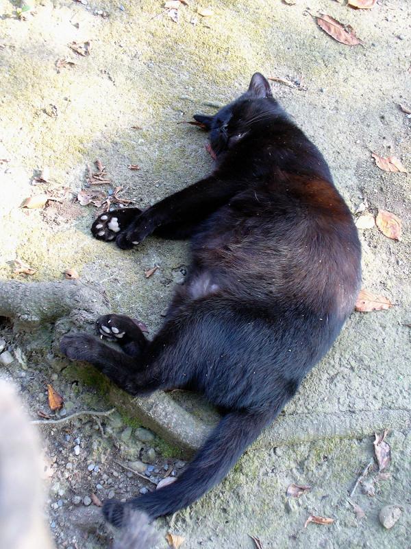 黒猫の肉球1