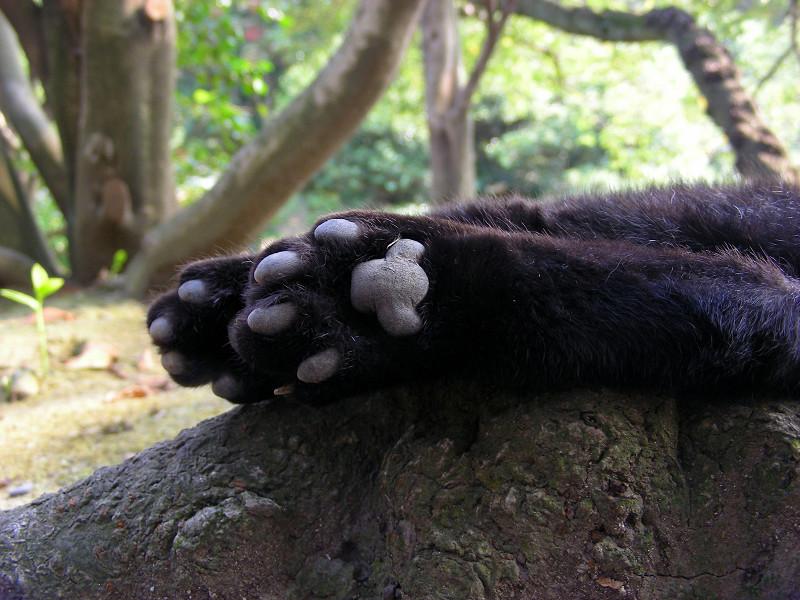 黒猫の肉球2