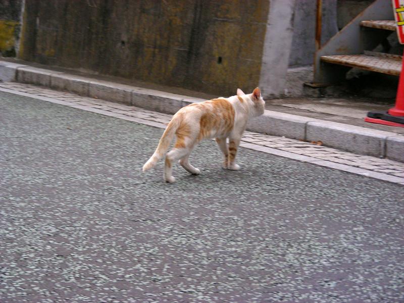 歩いてる茶白猫2