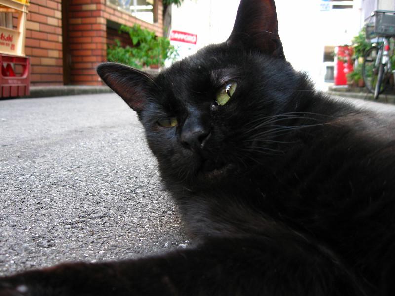 道路で横になってる黒猫2