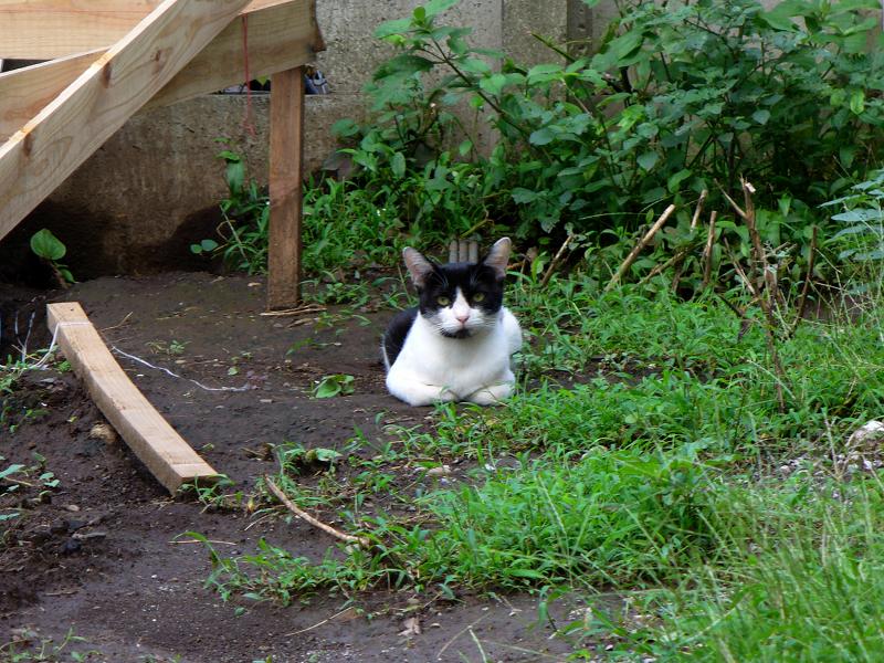 高所低所の猫たち2