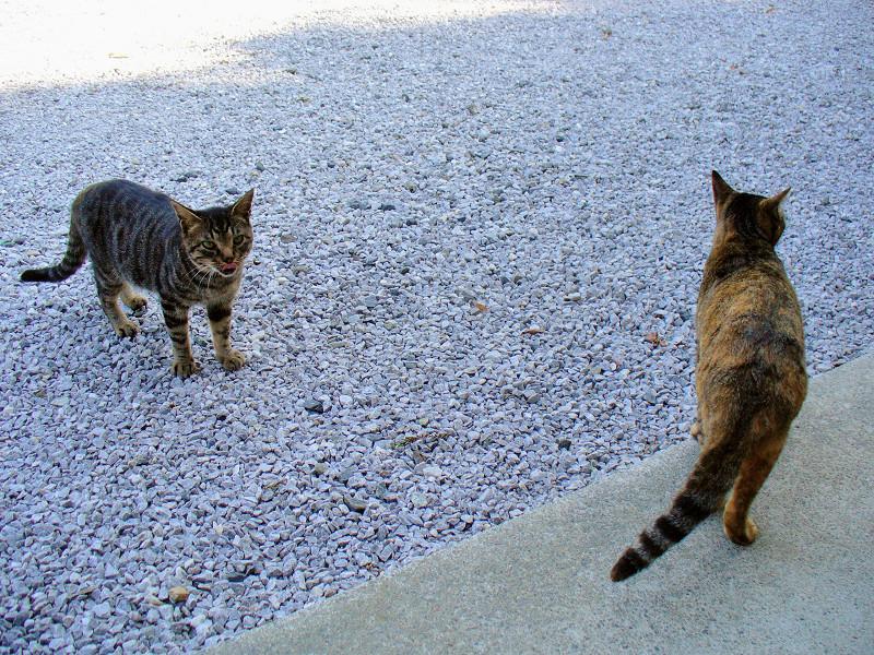 集まってきたキジトラ系猫2