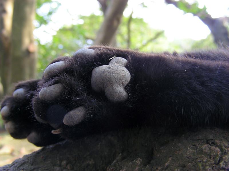 黒猫の肉球3