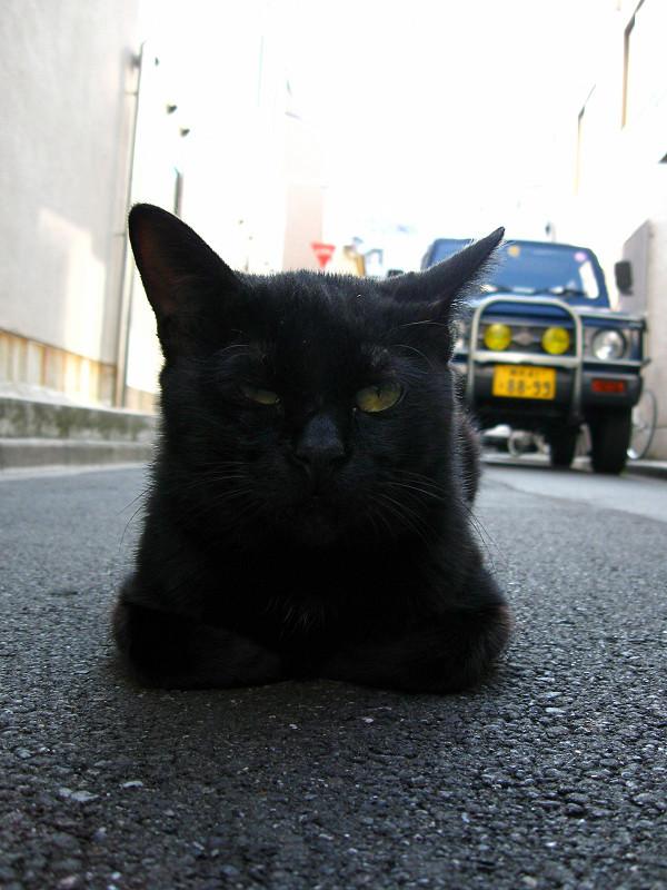 道路で横になってる黒猫3