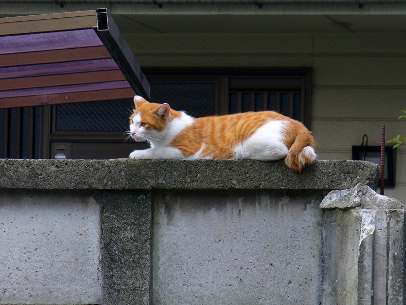 高所低所の猫たち3