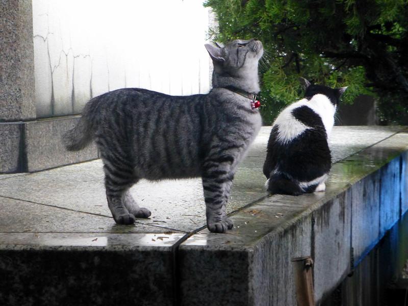 白黒猫とサバトラ猫2