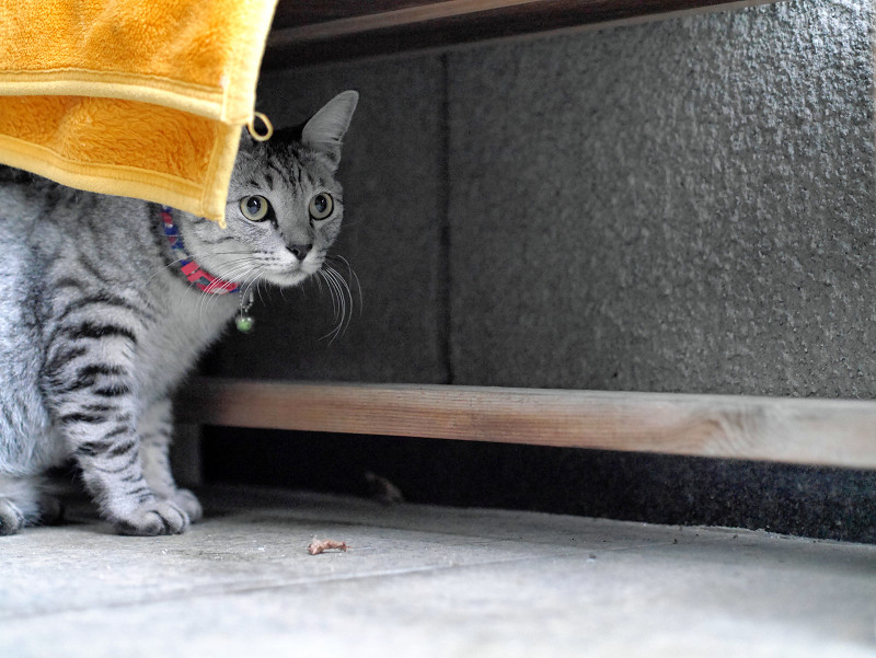 ベンチの下にサバトラ猫2