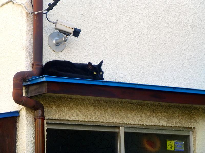 青い庇の黒猫1