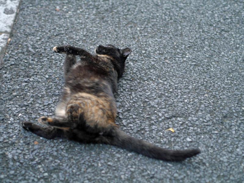 転がってる黒サビ柄猫1