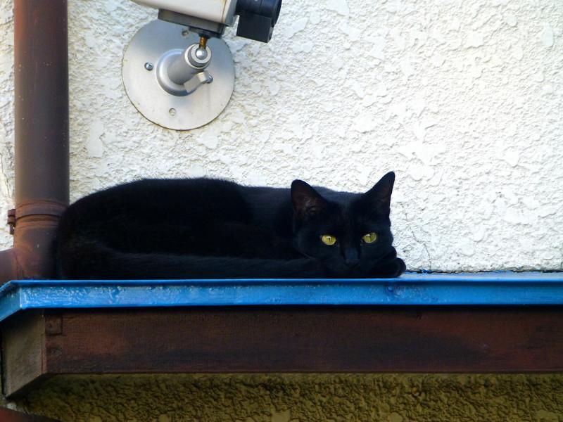 青い庇の黒猫2