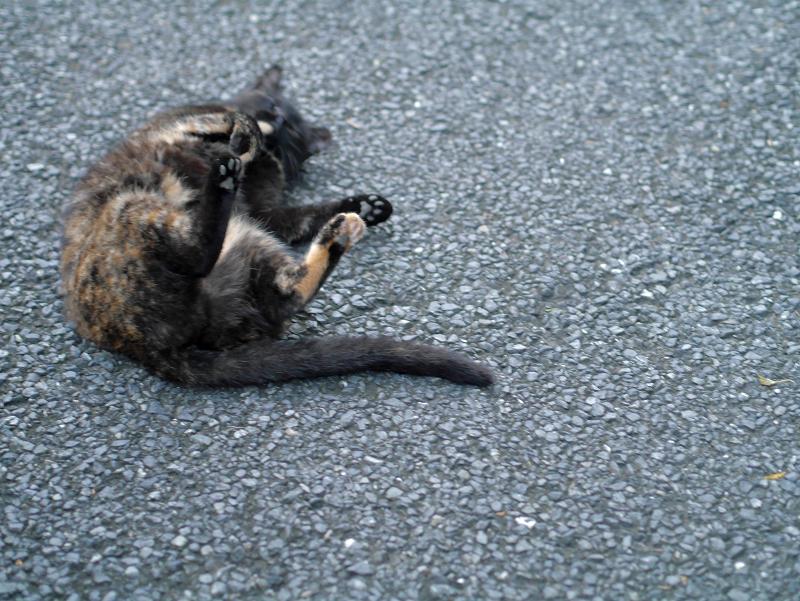 転がってる黒サビ柄猫2