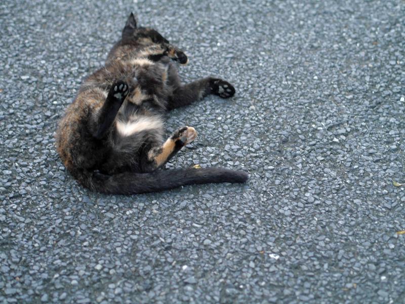 転がってる黒サビ柄猫3