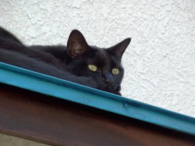 青い庇の黒猫3