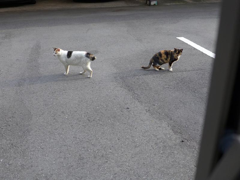 すれ違った猫たち2