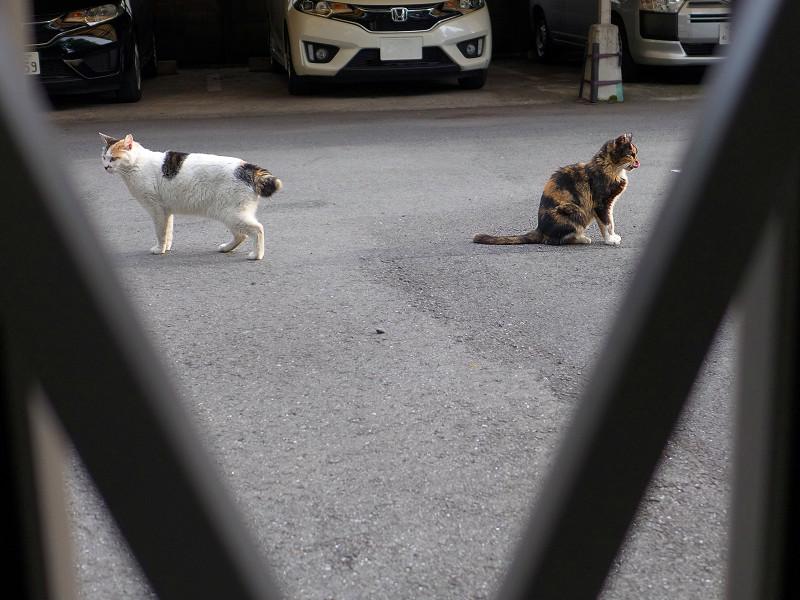 すれ違った猫たち3