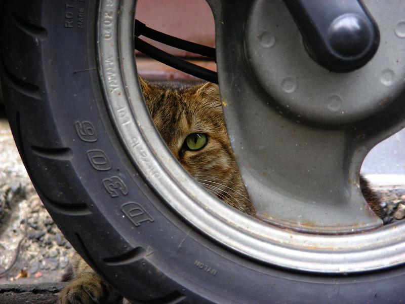 リアタイヤとキジトラ猫1