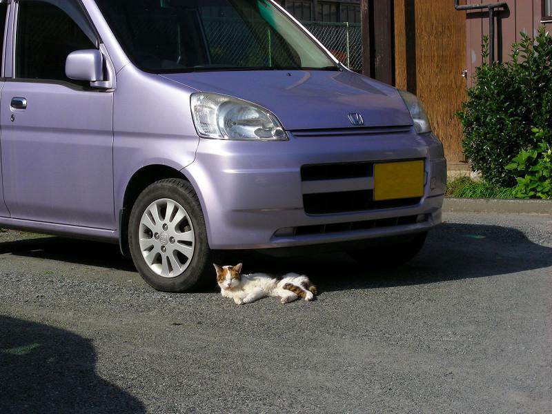 紫色の軽自動車と三毛猫1