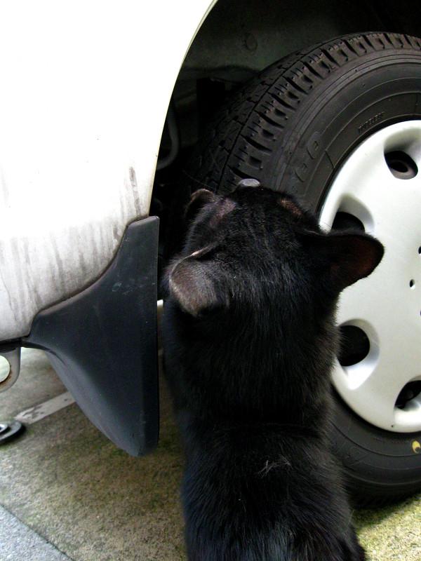 タイヤで爪研ぎ黒猫1