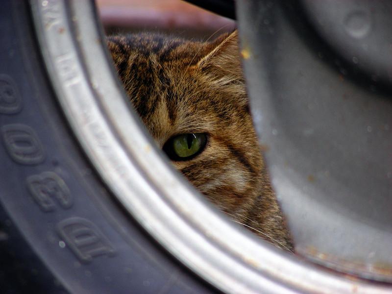 リアタイヤとキジトラ猫2