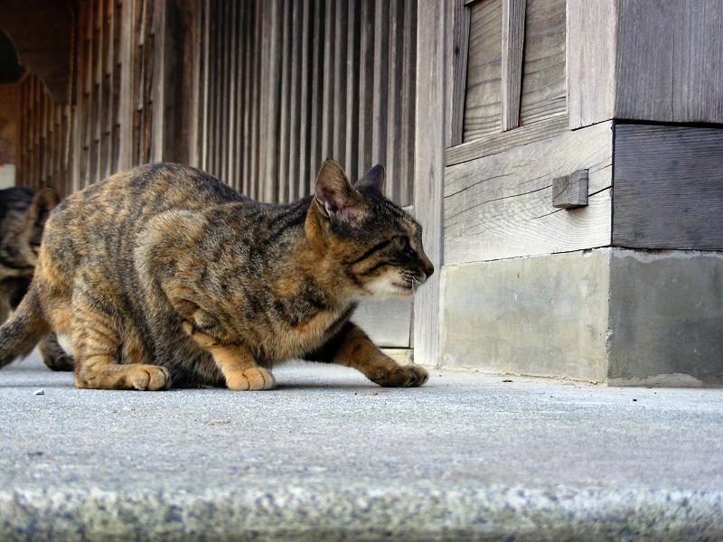 少し興奮のキジトラ系猫2