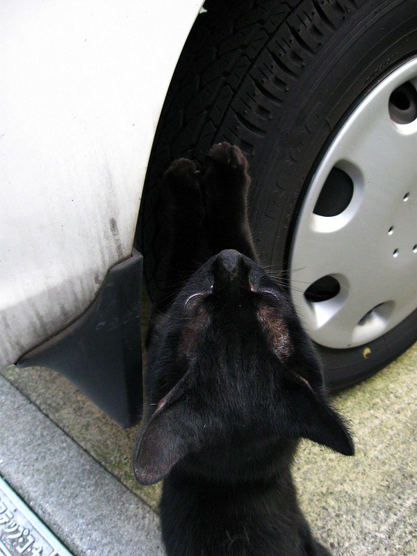 タイヤで爪研ぎ黒猫2