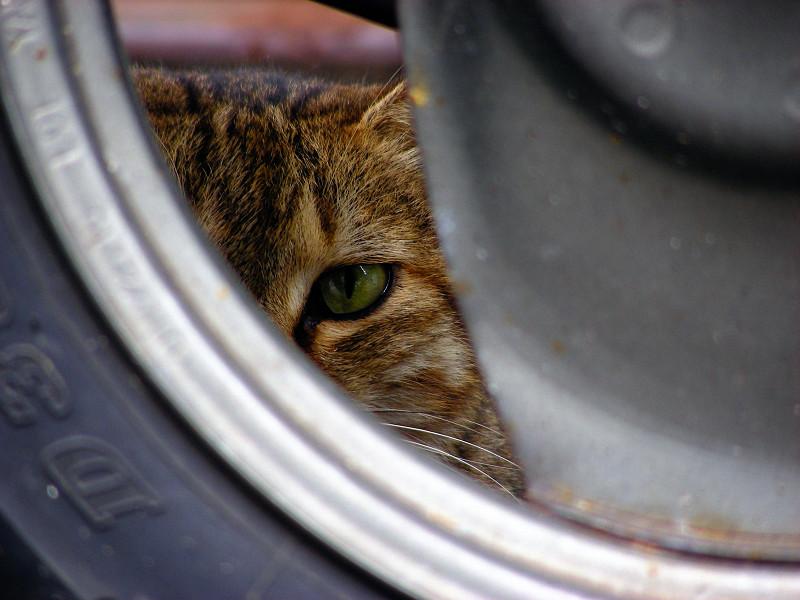 リアタイヤとキジトラ猫3