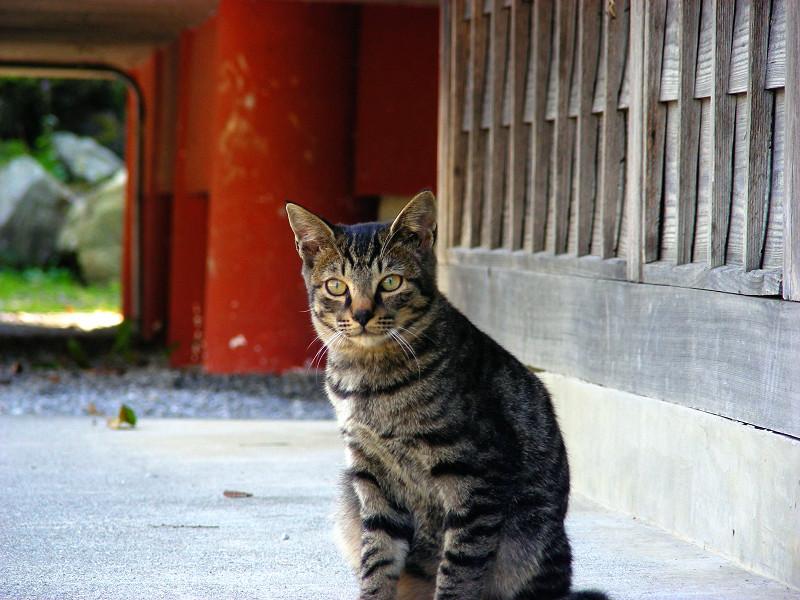 少し興奮のキジトラ系猫3