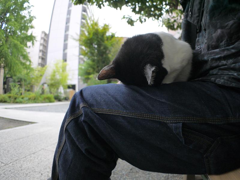 膝でごめん寝してる白黒猫2