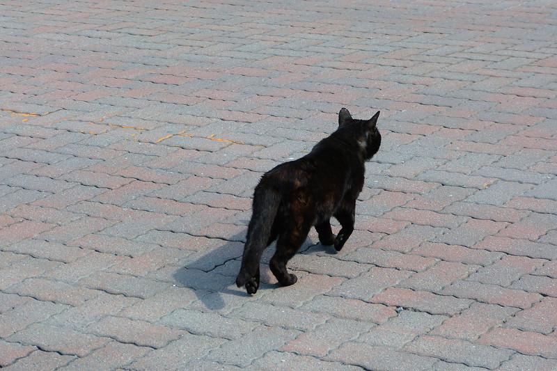 道を歩く黒猫1