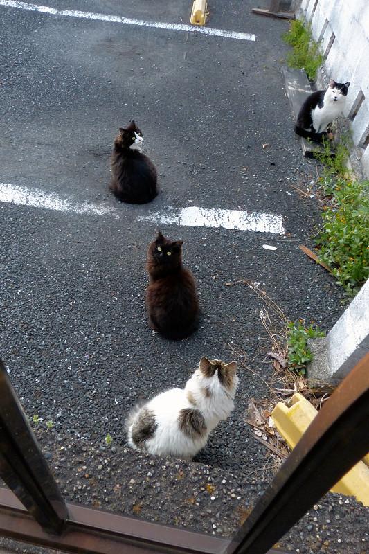 振り向く猫たち