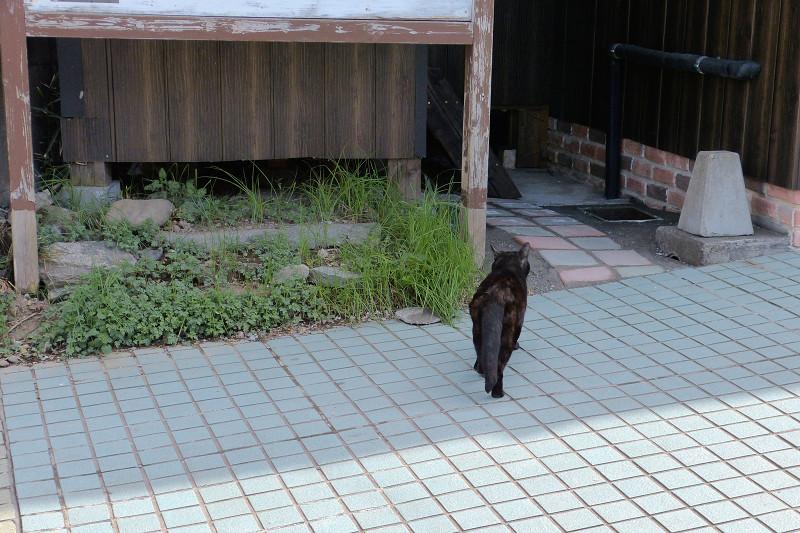 道を歩く黒猫2