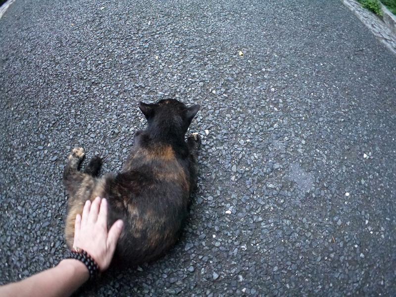 腰を触られた黒サビ柄猫2
