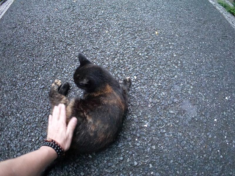 腰を触られた黒サビ柄猫3